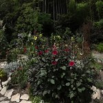 la foret de bambou borde le jardin