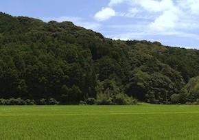 vue depuis la gare de komanaki (totoro ?)