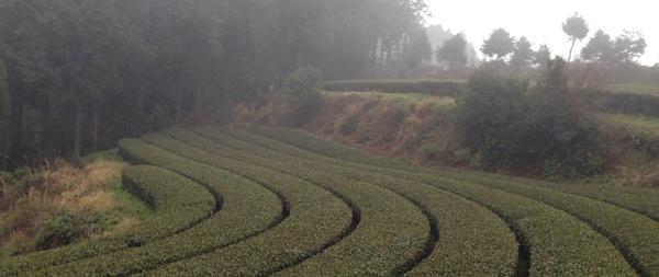la parcelle en agriculture biologique
